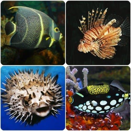 Animalia Stellarum ~ Pisces the Fish - Briana Saussy
